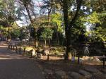 公園春.JPG
